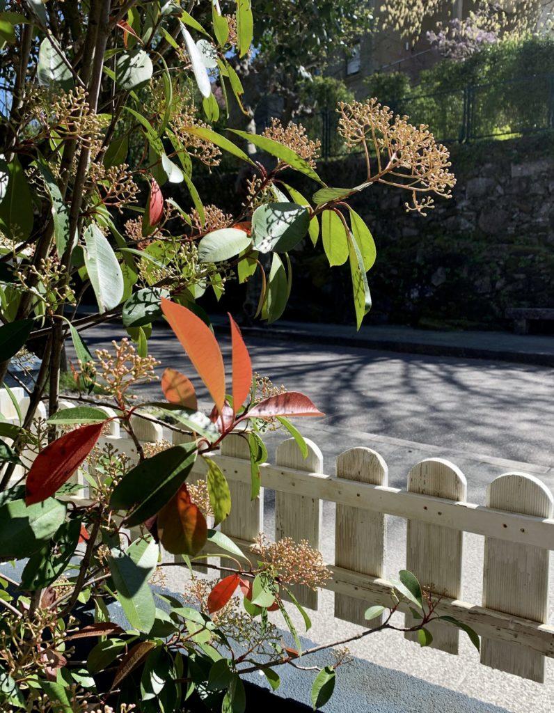 Flores en la terraza de Simoneta