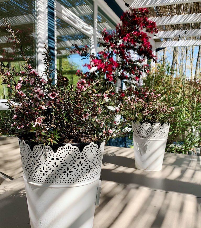 Plantas en la terraza de Simoneta and Co